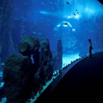 Ausflug Las Palmas + Botanischer Garten + Vulkan + Aquarium  Poema del Mar (Meeresgedicht)